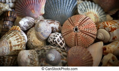 Shells of many types and sizes, close up