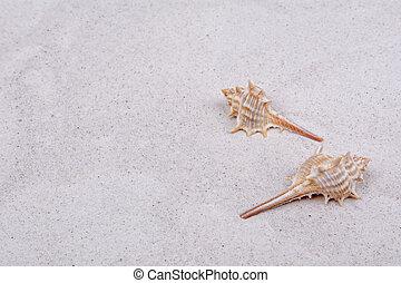 Shells on a grey sand background