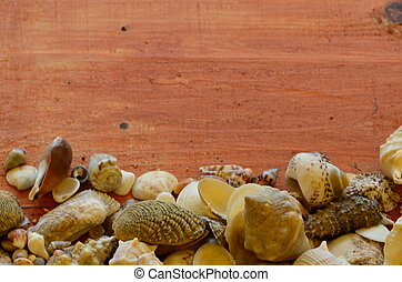 Shells on brown wooden background