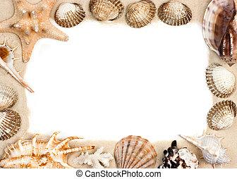 Shells on sand frame