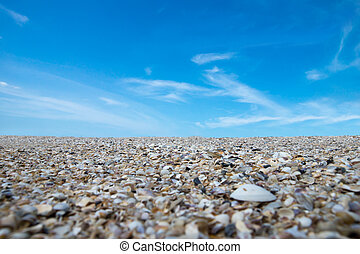Shells on the beach and blue sky.