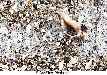 Shells on the beach evening sun
