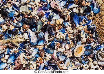 Shells on the Rocks