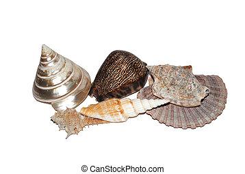Shells on white background