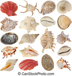 the shells collection photo on white background