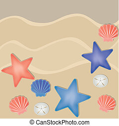 Shells, starfish and sand dollars on a sandy beach