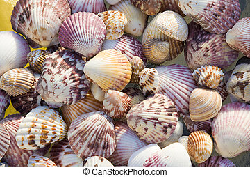 Shells, top view - Top view of colorful shells in bright...