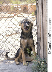 Shelter Dog - Dog in his cage at the animal shelter