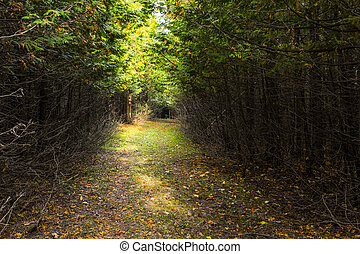 sheltered forest pathway