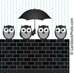Sheltering from the rain - Monochrome comical birds...
