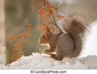 sheltering snow