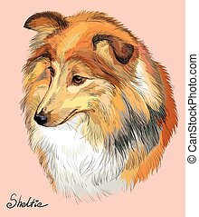 Sheltie colorful vector hand drawing portrait - Sheltie...