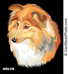 Sheltie colorful vector portrait - Colored portrait of...