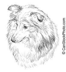 Sheltie vector hand drawing portrait - Vector outline...