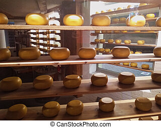 shelves of Dutch cheese forms. a typical display in the shops of Amsterdam and the rest of the Netherlands