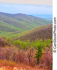 Shenandoah National Park of Virginia - Shenandoah National...