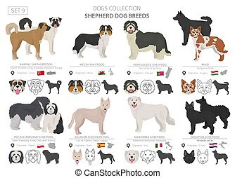 Shepherd and herding dogs collection isolated on white. Flat...