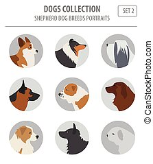 Shepherd dog breeds, sheepdogs collection isolated on white....