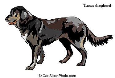 (shepherd), vektor, hund, abbildung