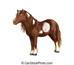 Shetland pony, Miniature Horse Brown with white spots,  Isolated illustration on white background.