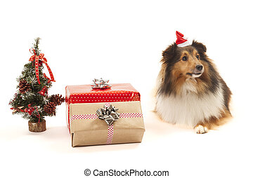 shetland sheepdog, 装飾, クリスマス
