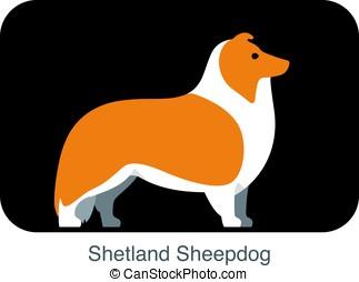Shetland Sheepdog dog breed flat icon design