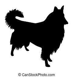 shetland, vetorial, silueta, sheepdog, pretas