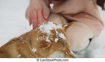 shiba, mignon, coup, elle, redresser, caresser, fin, girl, agréable, snow.