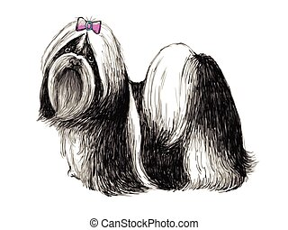 Shih tzu - Image of Shih tzu , hand drawn vector.