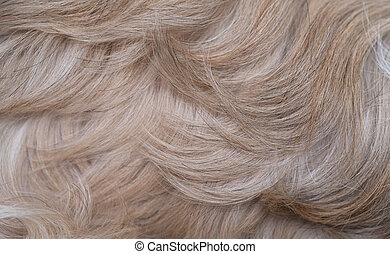 Shih tzu dog hair