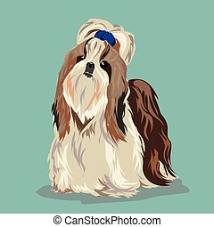 Shih Tzu dog - Shih tzu poses on a white background