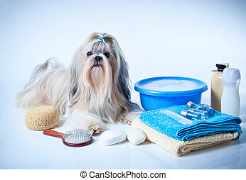 Shih tzu dog washing concept. Portrait with comb, towels and...