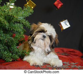 shih tzu puppy lying under a christmas tree