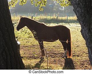 Shillouette of horse in morning sun