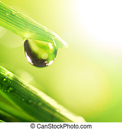 shine water drop