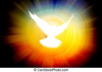 shining dove on a sun rays background
