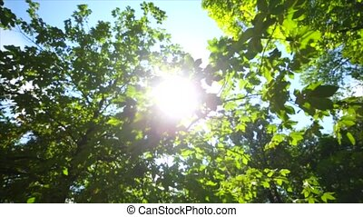 Shining sun through the green crowns of deciduous trees.