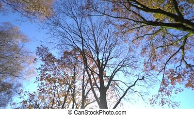 Shining Trees in Daylight. - Shining trees in daylight....