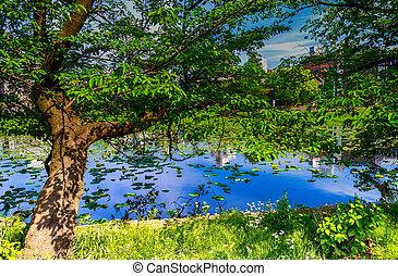 Shinobazu pond in Tokyo.