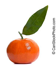 Shiny Clementine Fruit - Shiny clementine fruit on a white...