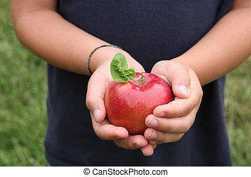 shiny red apple with leaf held in a child\'s hands