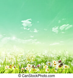 Shiny summer day on the meadow, natural backgrounds