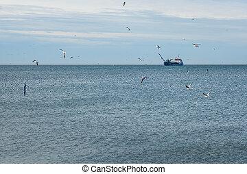Ship and seagulls in the sea, port of Poti, Georgia