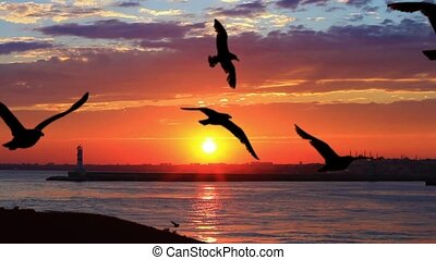 Ship following seagulls flying against sunset. Flock of seabirds on beautiful sunset