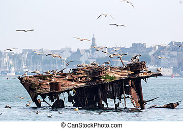 Ship wreck and seagulls