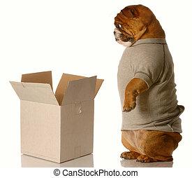 shipping or moving - english bulldog standing looking down...