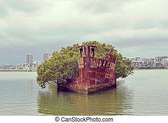 Shipwreck at Homebush bay