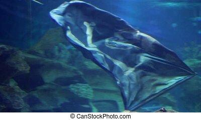 Jolly Roger - shipwreck Jolly Roger underwater