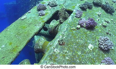 Shipwreck Salem Express in Red Sea, bottom of the sea