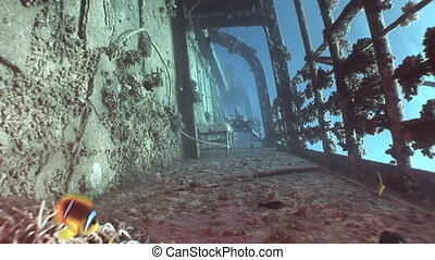 Shipwrecks Salem Express shipwrecks underwater in the Red...